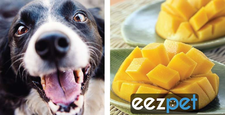 Can Dogs Eat Mangoes