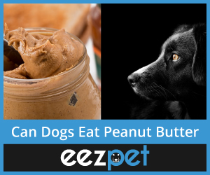 Can Dogs eat Peanut Butter